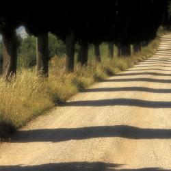 tuscan avenue