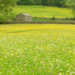 barn and wildflowers 2