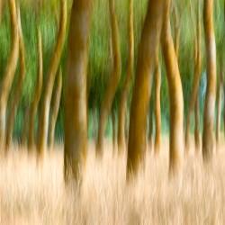 loire trees
