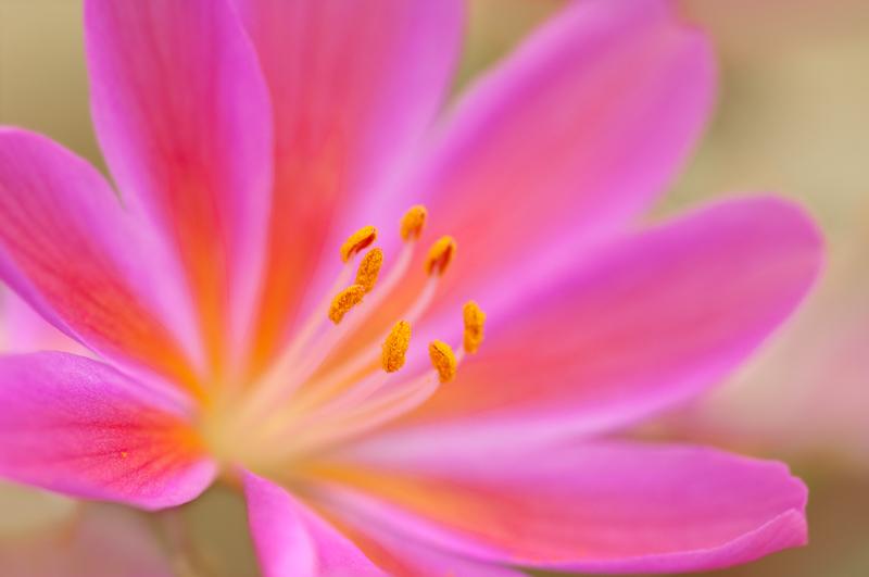 Sue Bishop Photography