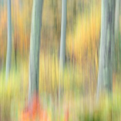 autumn woodland 2