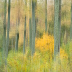 autumn woodland with yellow tree