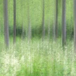 french woodland