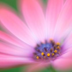 compositae (daisy) 292