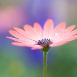 compositae (daisy) 97