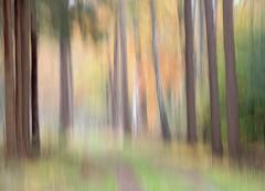 path through autumn woods